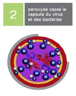 peroxyde casse la capsule du virus et des bactéries