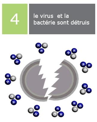 le virus et la bactérie sont détruis